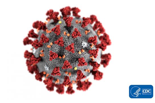 Coronavirus-19 morphology